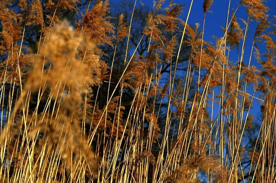 Stockholm Photograph - Nature Series 1.4 by Derya  Aktas