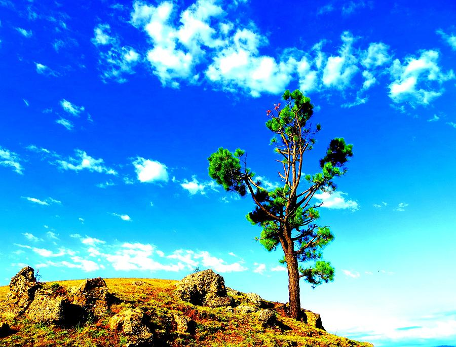 Landscape Pyrography - Nature by Viren Rana