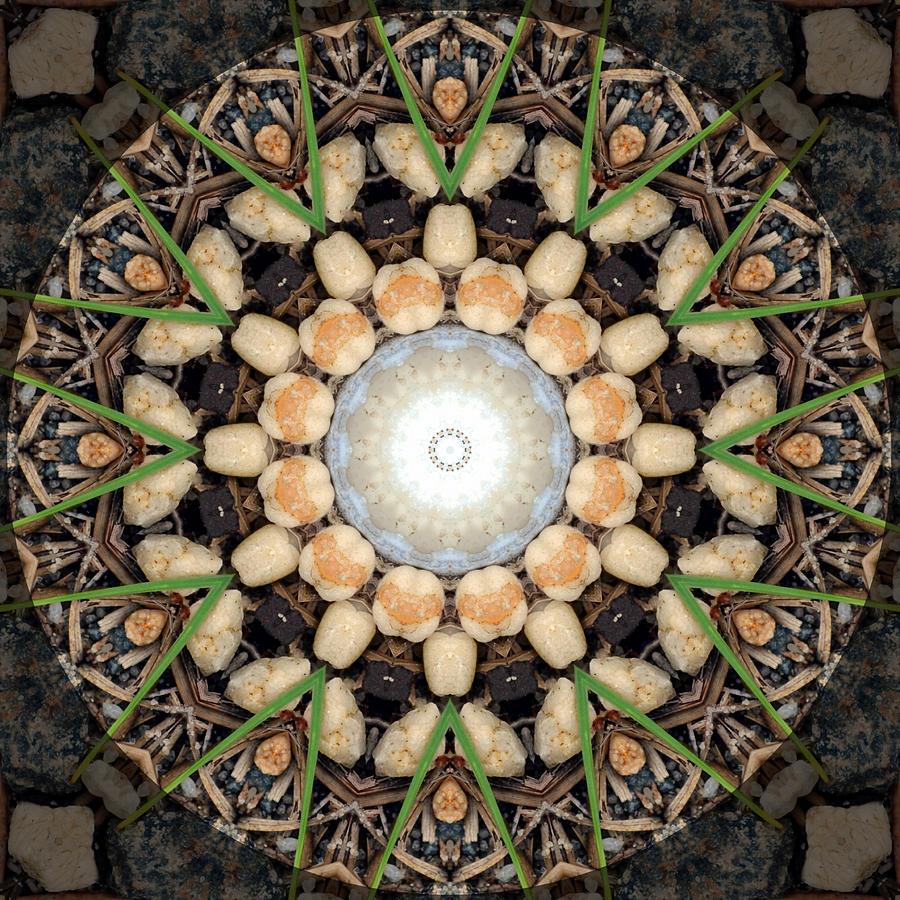 Nature Photograph - Nature Vortex Mandala #1 by Beth Sawickie