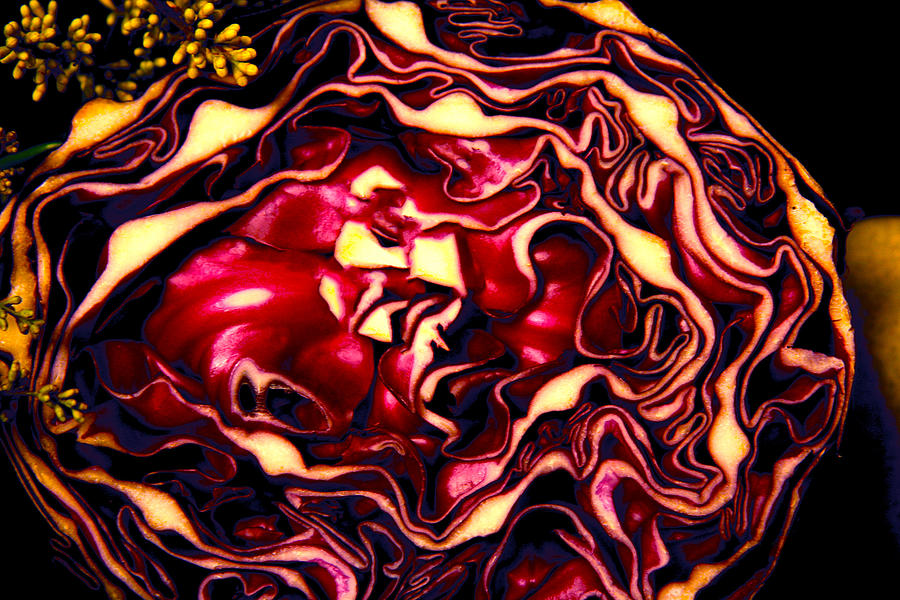 Red Cabbage Photograph - Natures Abstract Img_5060 by Torrey E Smith