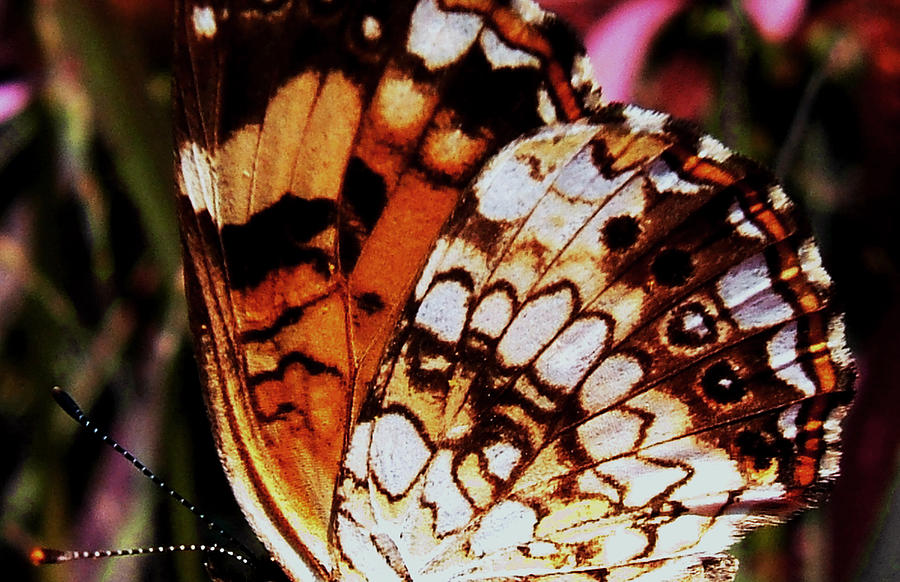 Abstracts Photograph - Natures Abstracts Butterfly Wings 005 by George Bostian