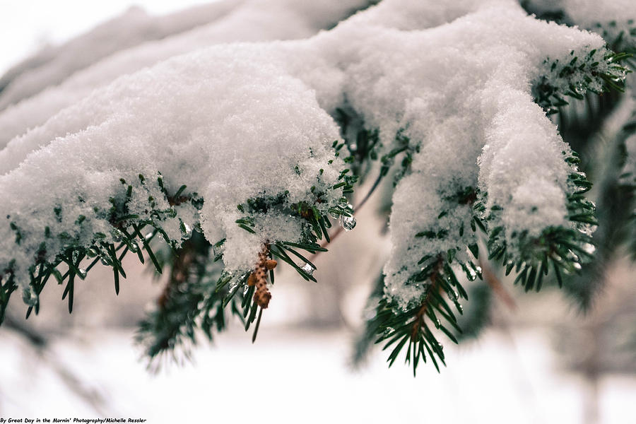 Pine Trees Photograph - Natures Art Work by Michelle and John Ressler