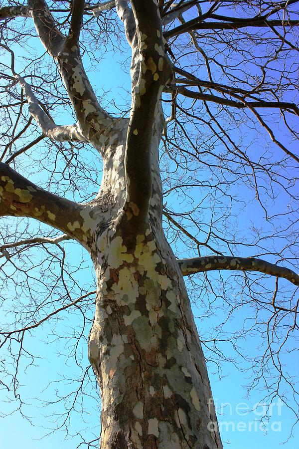 Tree Photograph - Natures Art Work - Patch Work by Judy Palkimas