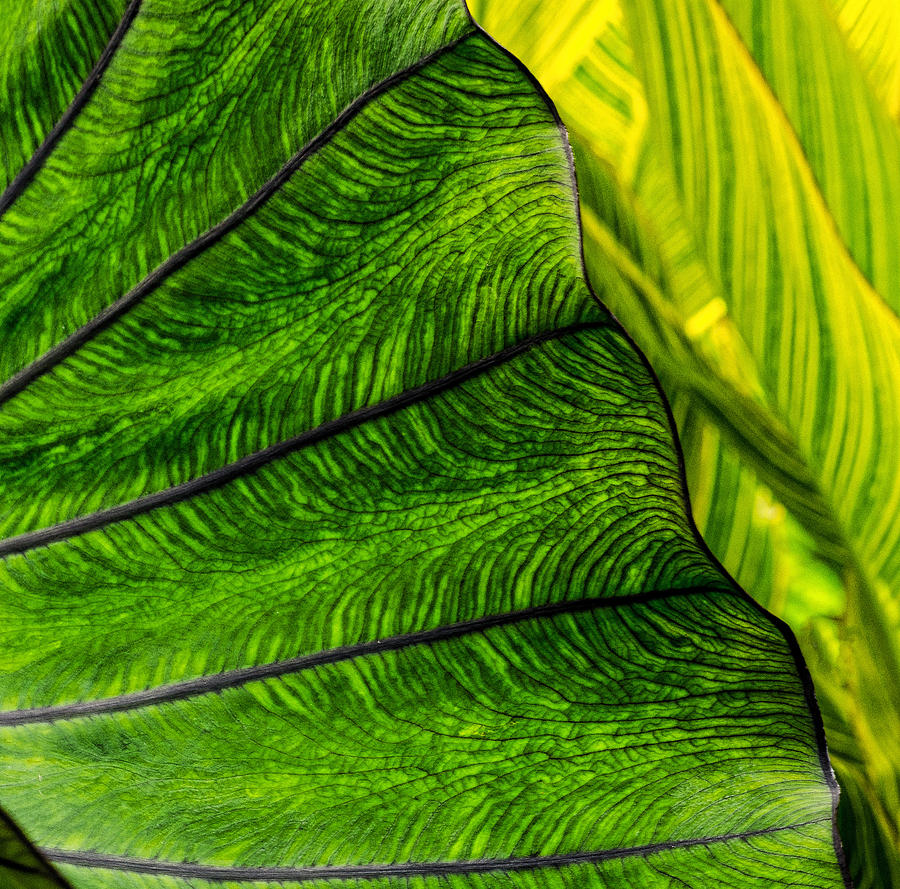 Leaf Photograph - Natures Artistry by Jordan Blackstone