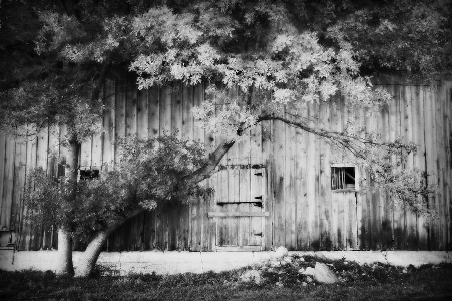 Barn Photograph - Natures Awning Bw by Julie Hamilton