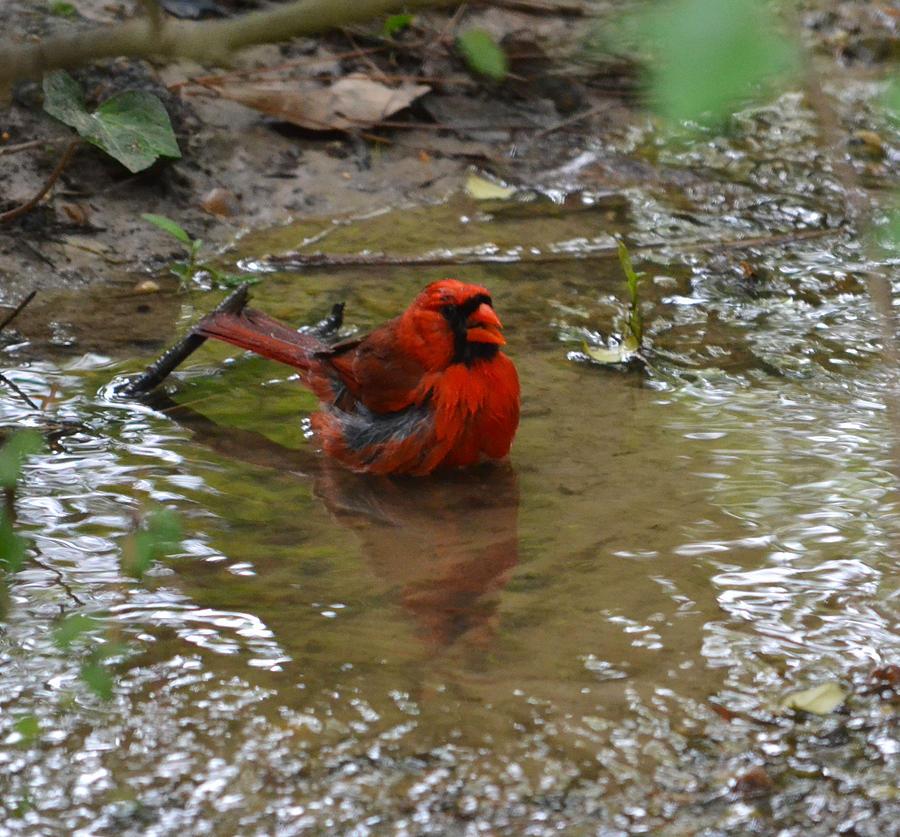 Water Photograph - Natures Bird Bath by Joe Bledsoe