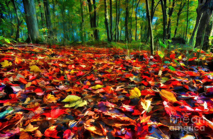Leaves Photograph - Natures Carpet In The Fall by Dan Friend