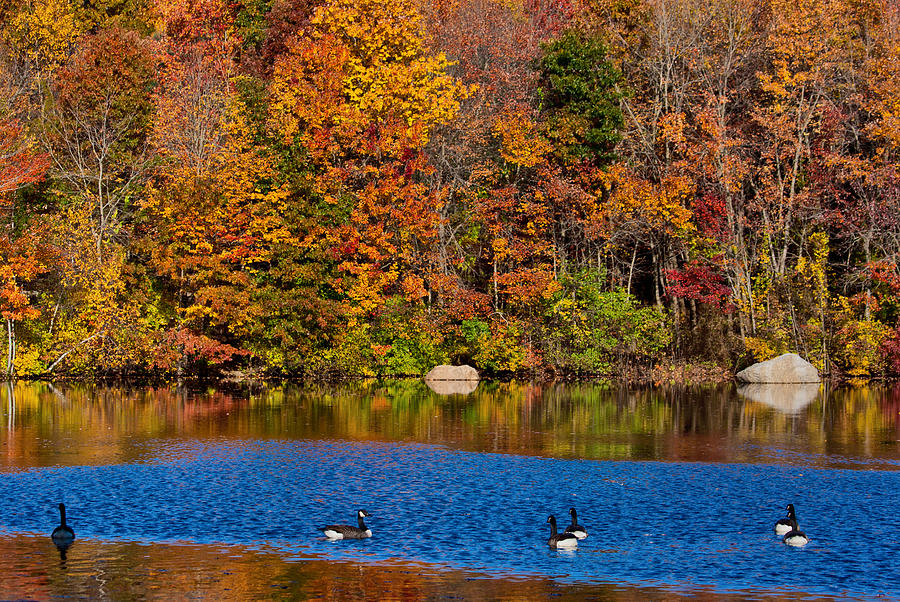 Autumn Photograph - Natures Colorful Autumn by Karol Livote