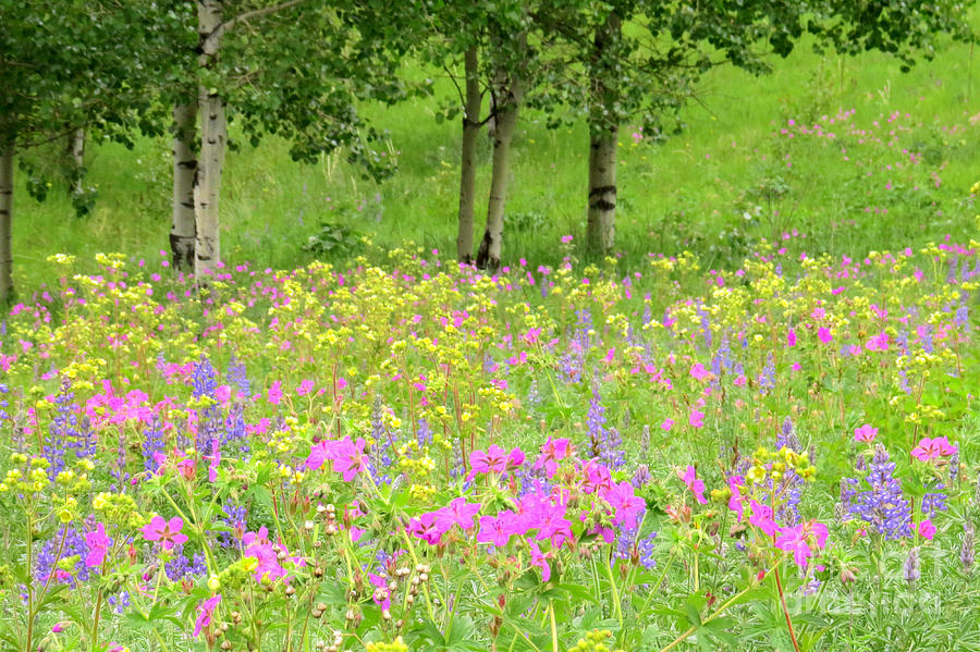 Wildflowers Photograph - Natures Display by Frank Townsley