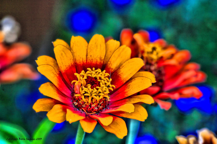 Bright Flowers Photograph - Natures Eye Candy by Rebecca Adams