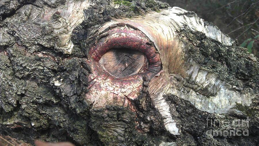 Wood Photograph - Natures Eye  by Tom Salt