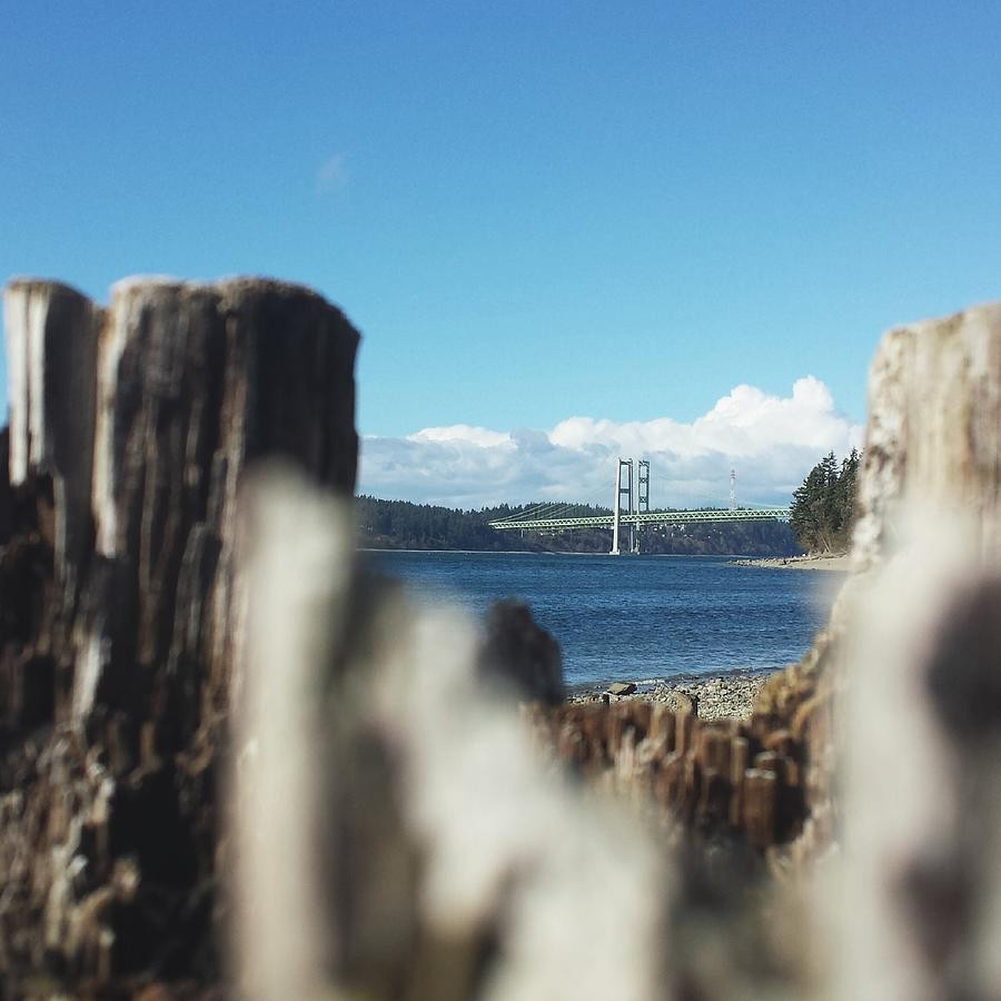 Tacoma Photograph - Natures Frame by Andrea Osborn