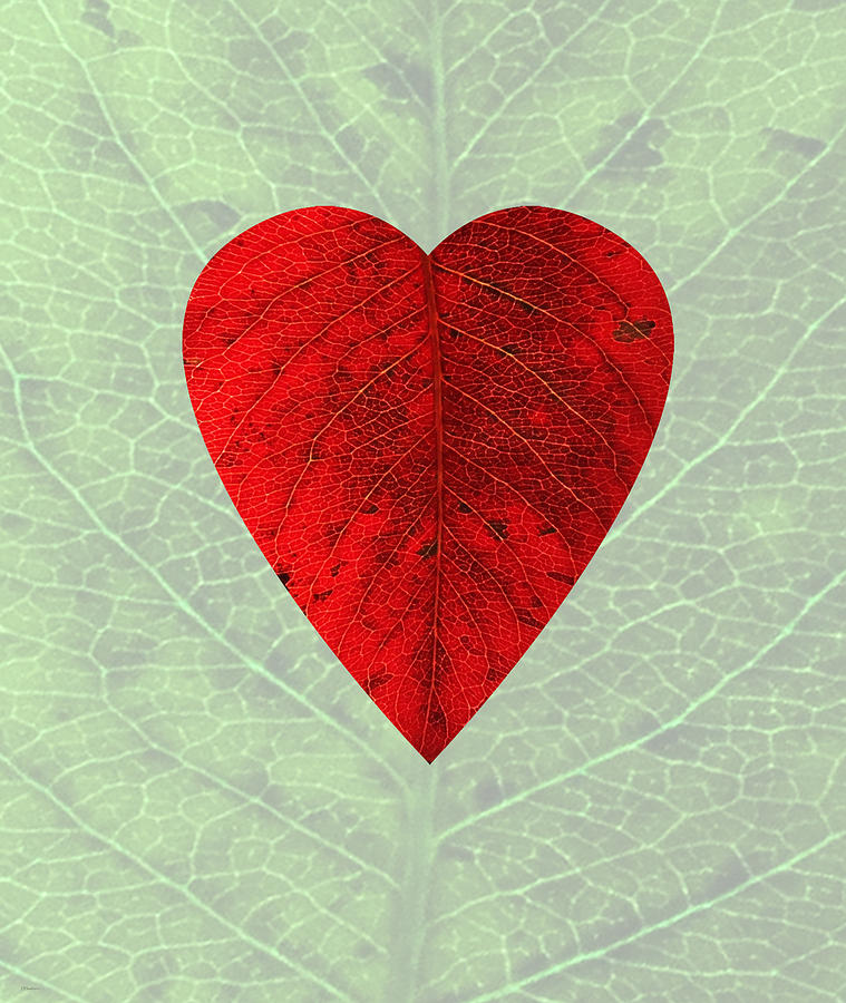 Red Digital Art - Natures Heart by Deborah Smith