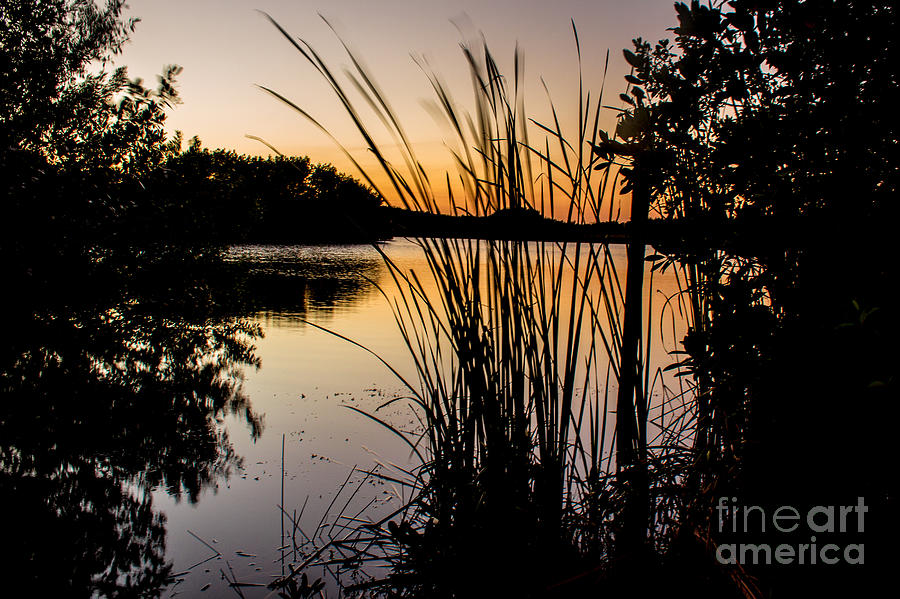 Everglades National Park Photograph - Natures Hidden Beauty by Rene Triay Photography
