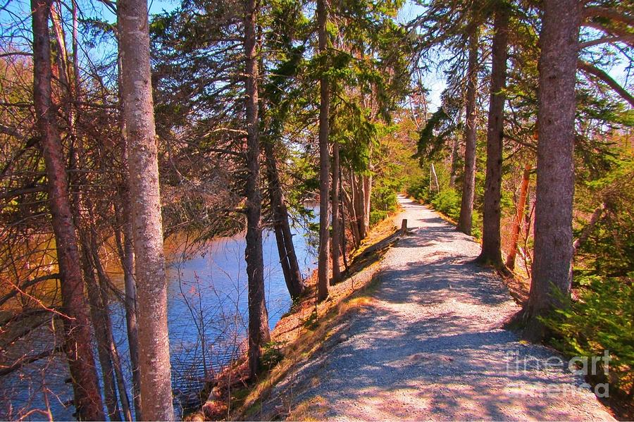 Nature Painting - Natures Highway by John Malone