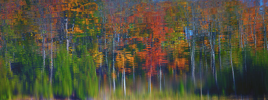 Reflection Photograph - Natures Paint Brush by Gary Hall