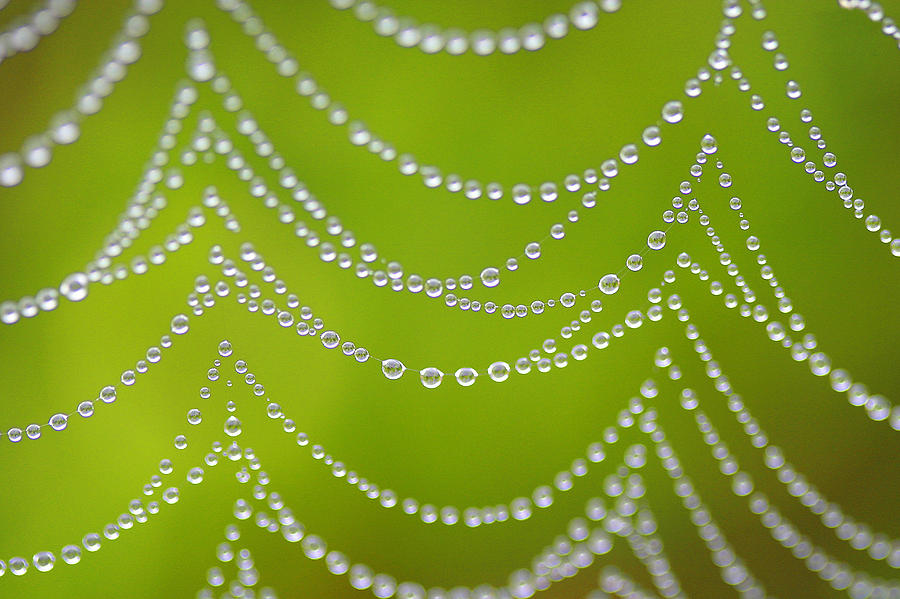 Web Photograph - Natures Pearls  by Jeff Klingler