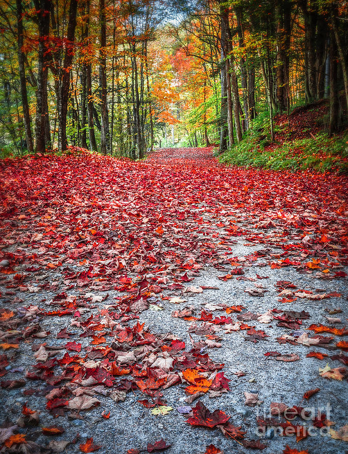 Fall Photograph - Natures Red Carpet by Edward Fielding