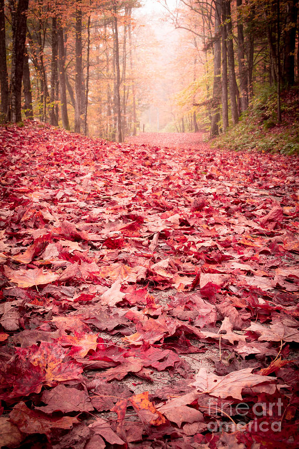 Woods Photograph - Natures Red Carpet Revisited by Edward Fielding
