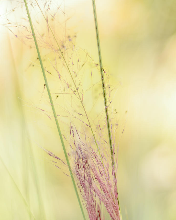 Weeds Photograph - Natures Serenity by Camille Lopez