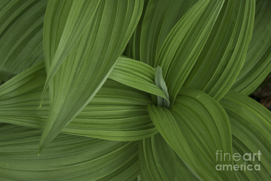 Natures Splendor Photograph - Natures Splendor  by Alana Ranney