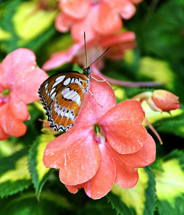 Butterfly Photograph - Natures Touch by David Earl Johnson