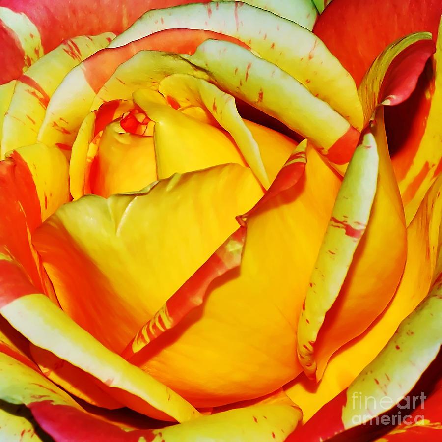 Nature's Vivid Colors Photograph - Natures Vivid Colors by Kaye Menner