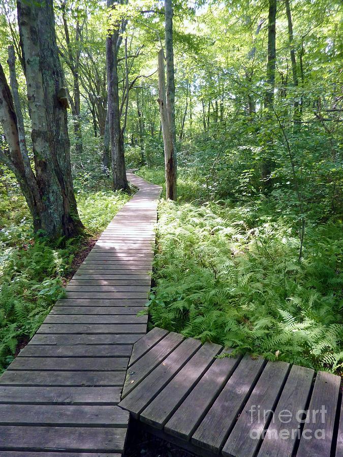 Natures Walkway Photograph