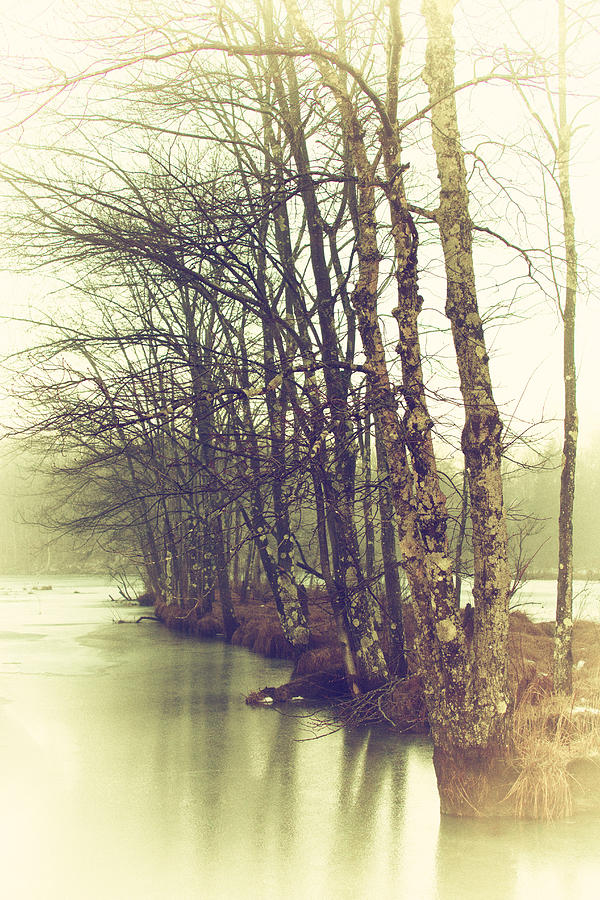 Winter Photograph - Natures Winter Slumber by Karol Livote