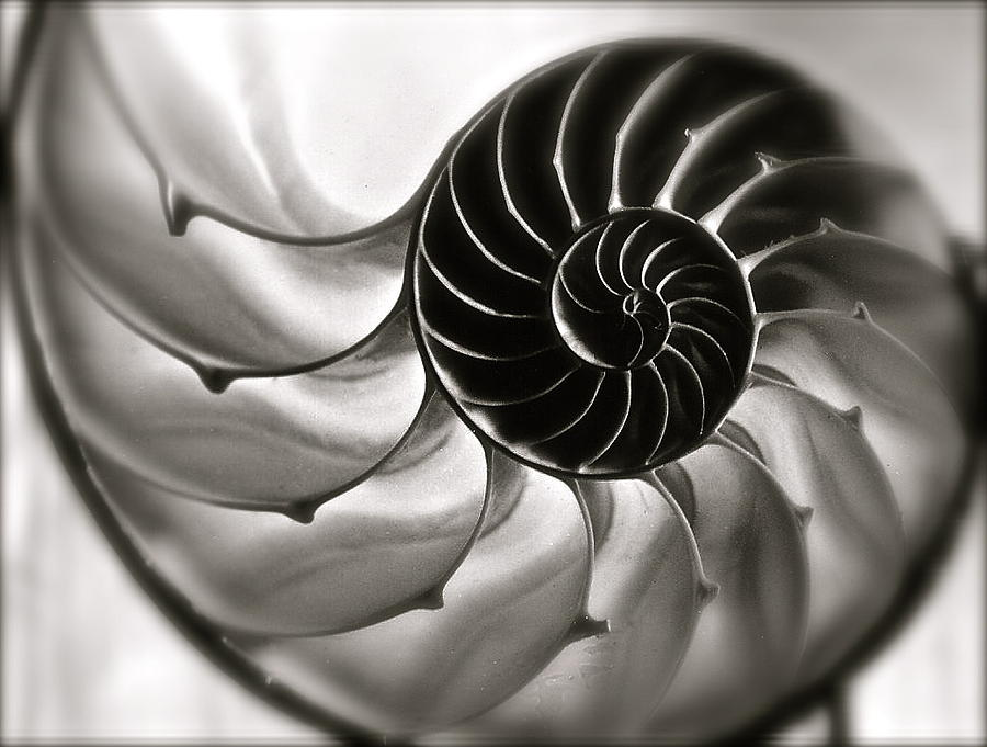 Nautilus by Kim Pippinger