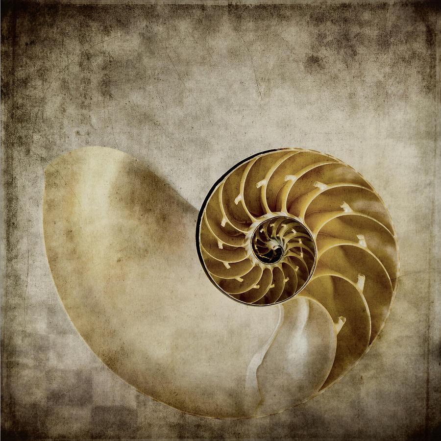 Nautilus Photograph - Nautilus Shell by Carol Leigh