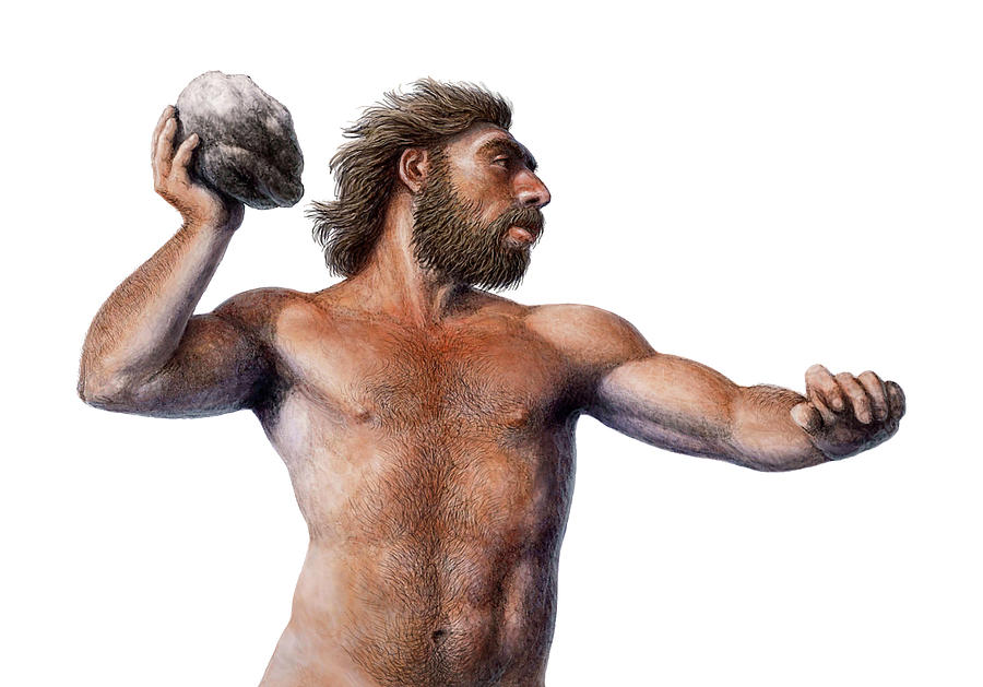 an overview of homo neanderthalensis or nearnderthals Media in category homo neanderthalensisthe following 34 files are in this category, out of 34 total.