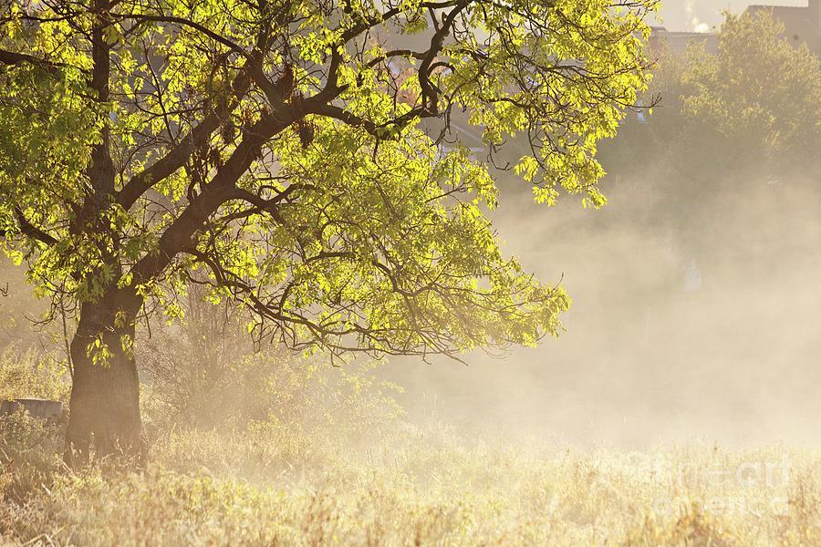 Heiko Photograph - Nebulous Tree by Heiko Koehrer-Wagner