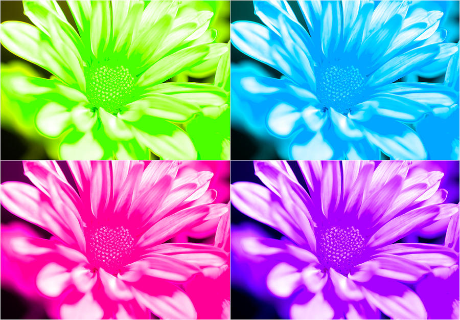 neon flowers photograph by jessica wakefield