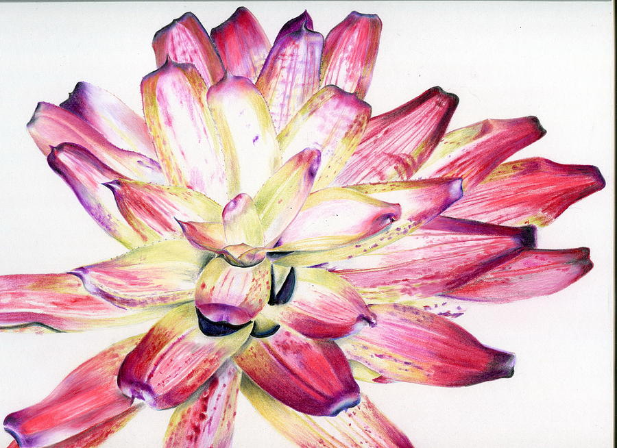 Bromeliad Painting - Neoregelia Picasso by Penrith Goff