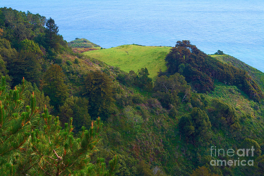 Nepenthe View At Big Sur In California Photograph