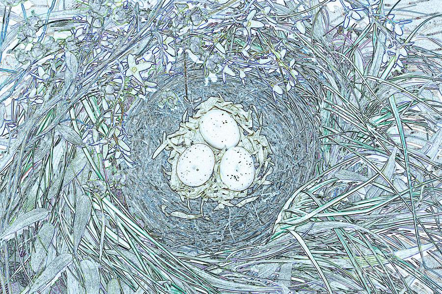 First Star Art By Jrr Photograph - Nest Eggs By Jrr by First Star Art