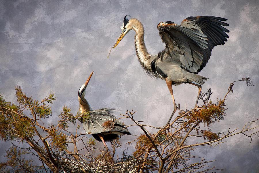 Bird Photograph - Nesting Time by Debra and Dave Vanderlaan
