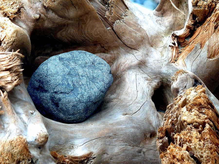 Abstract Photograph - Nestle by Lauren Leigh Hunter Fine Art Photography