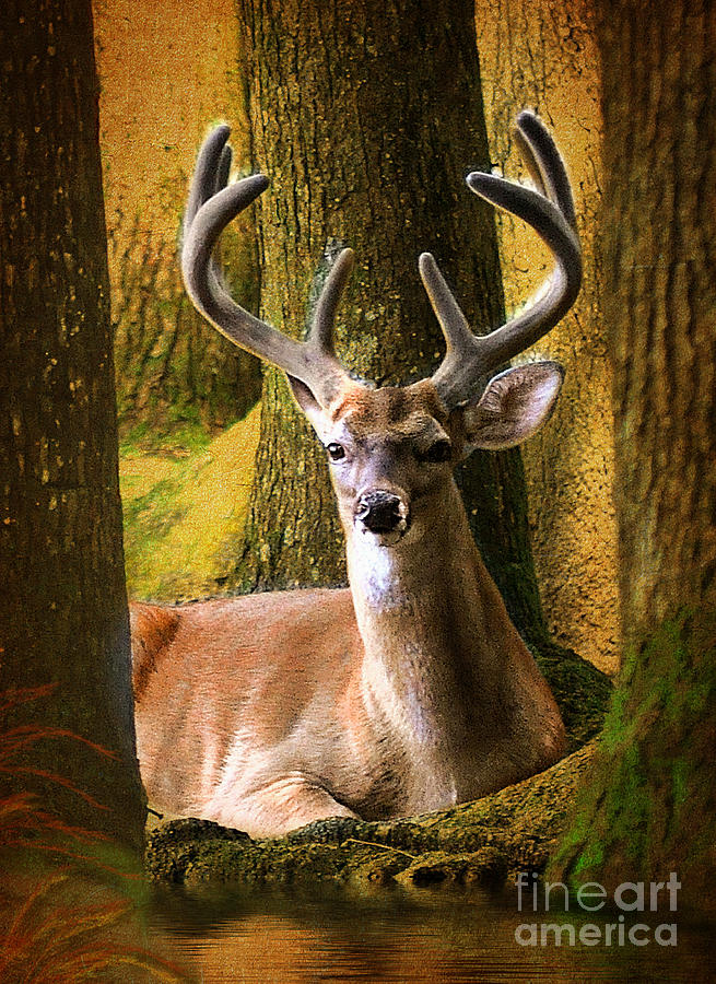 Mammals Photograph - Nestled In The Woods by Kathy Baccari