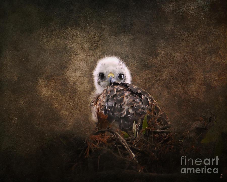 Baby Bird Photograph - Nestling by Jai Johnson