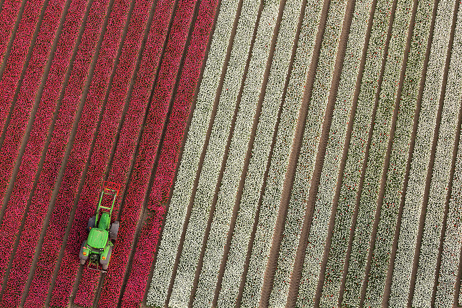 Netherlands Photograph - Netherlands, Tractor In Tulip Fields by Peter Adams