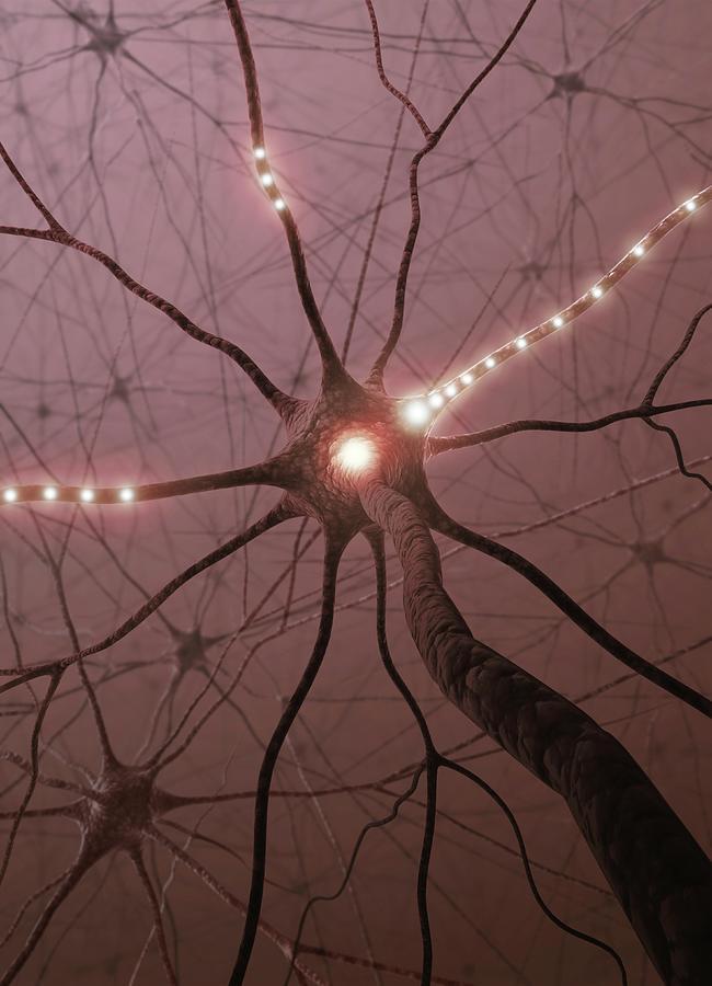 Neural Network, Artwork Digital Art by Ktsdesign