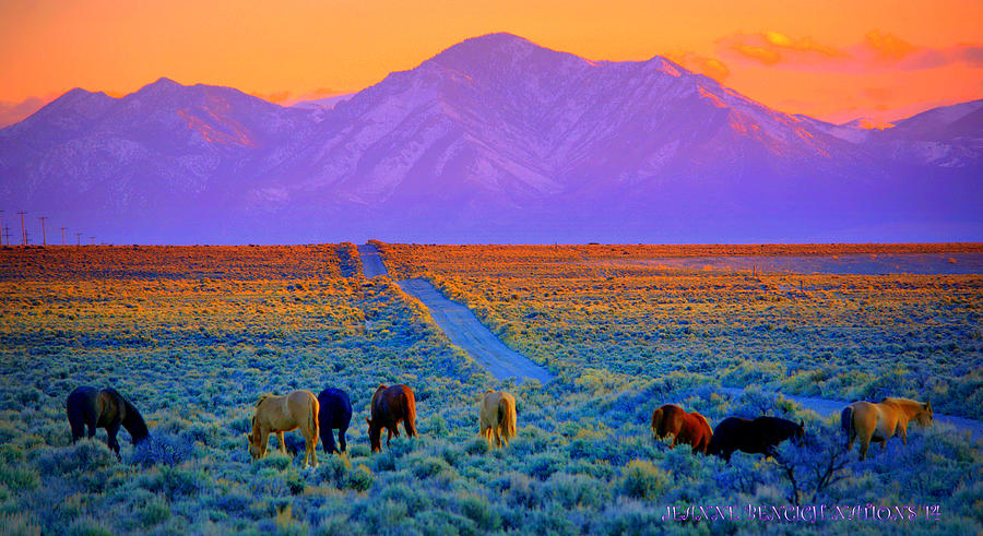 Wild Horses Photograph - Wild Horse Country  by Jeanne  Bencich-Nations