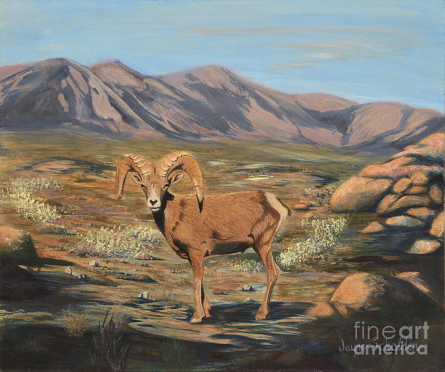 Nevada Desert Bighorn Sheep Painting By Jayne Schelden