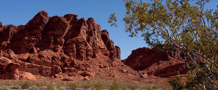 Desert Photograph - Nevadas Gem by Wayne Vedvig