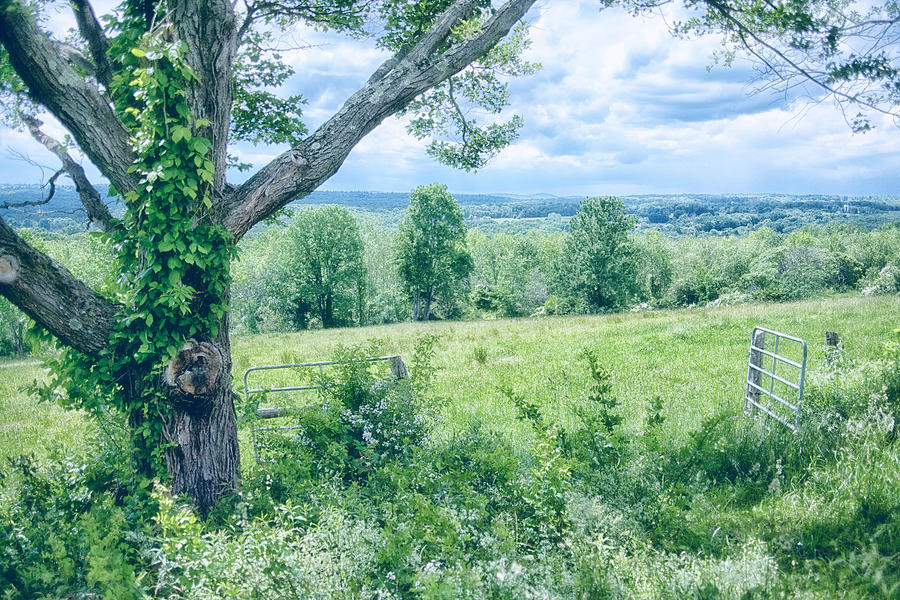 Landscape Photograph - Never Ending Fields by Karol Livote