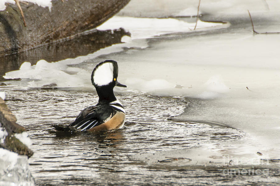 Never Too Cold To Mate by Ilene Hoffman