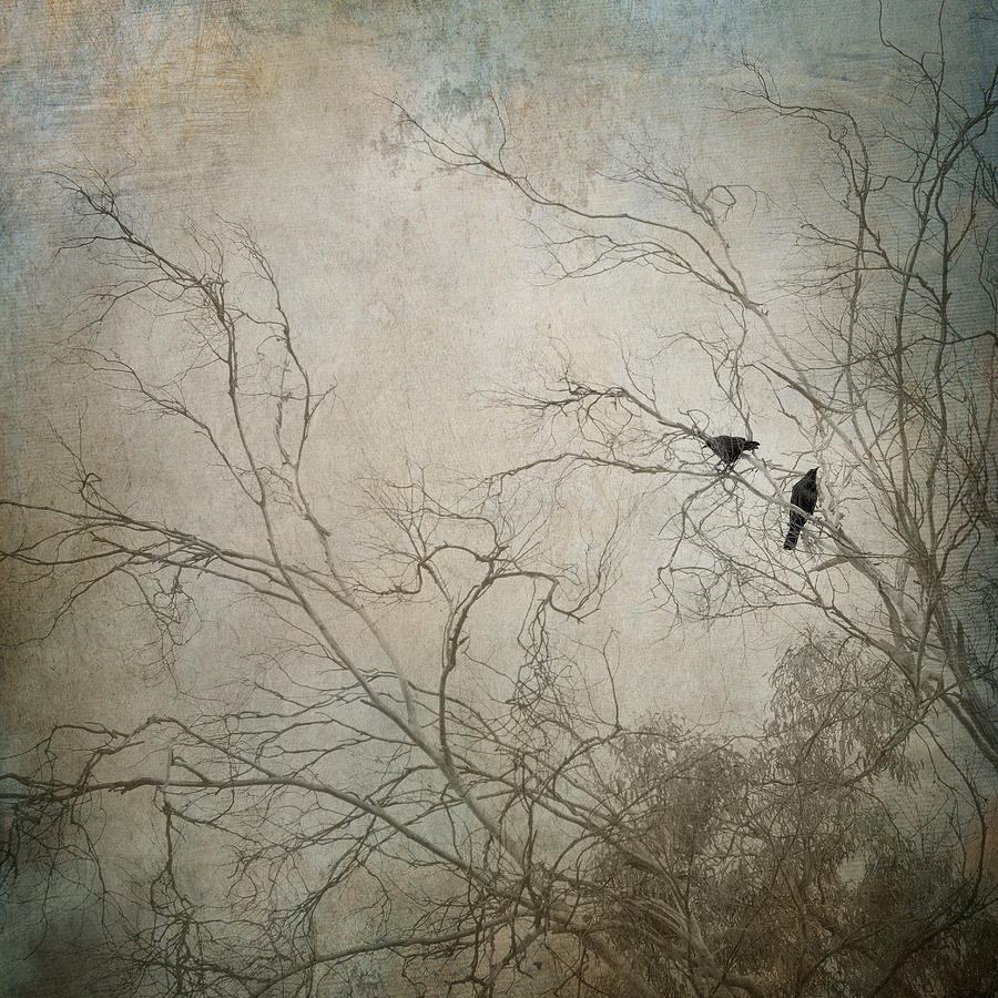 Raven Photograph - Nevermore... by Amy Weiss