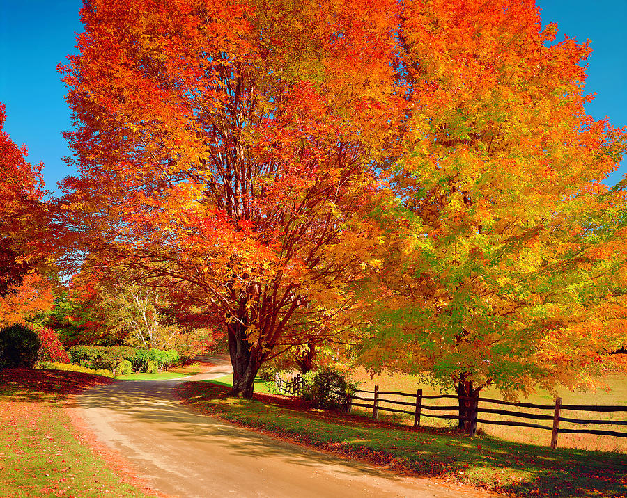 New England Autumn Country Road Photograph by Dszc